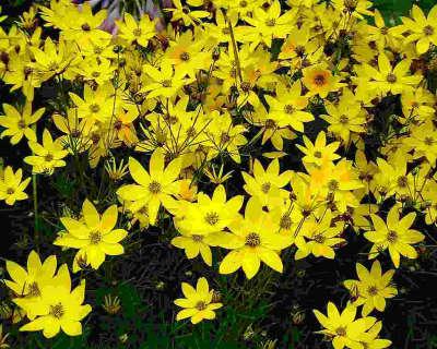 Flowers Skibo Gula