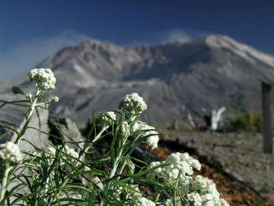 Volcano Flowers
