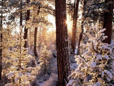 Tree on Christmas Morning