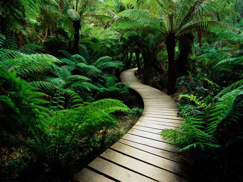 Amazing wood road in greeny forrest