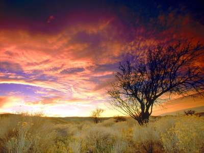 Almond Tree, Antelope Valley, California   1600x
