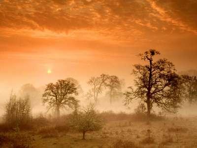 Foggy Meadow Sunrise, Corvallis, Oregon   1600x1