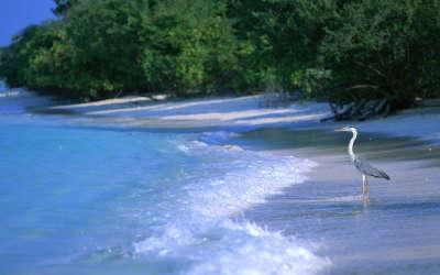 Maldives Paradise Island 15