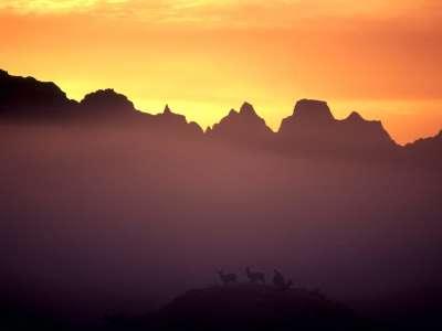 Mule Deer At Sunrise, Badlands, South Dakota   1