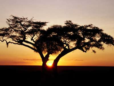 Safari Sunrise, Africa