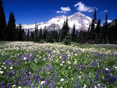Seasonal Beauty, Mount Rainier, Washington