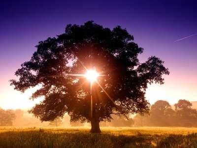 Tree Of Life, North Devon, England