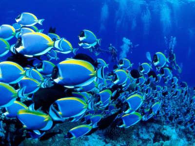 Underwater Wallpaper (1)