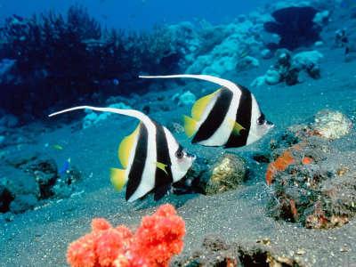 Underwater Wallpaper (10)