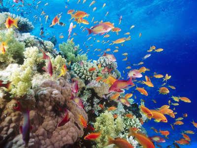 Underwater Wallpaper (26)