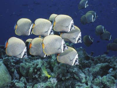 Underwater Wallpaper (27)