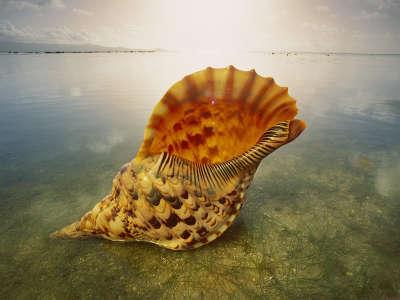 Underwater Shell