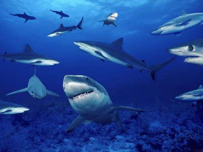 Underwater - Shark