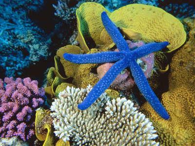 Underwater Wallpaper (33)