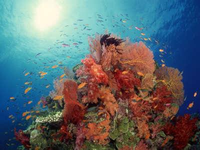 Underwater Wallpaper (55)
