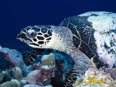 Underwater Wallpaper (60)