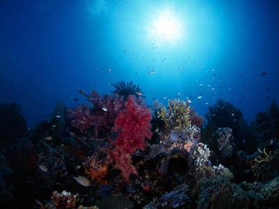 Underwater Wallpaper (61)