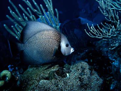 Underwater Wallpaper (64)