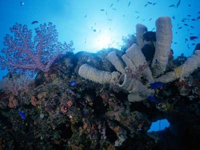 Underwater Wallpaper (67)