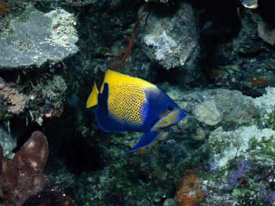 Underwater Wallpaper (70)