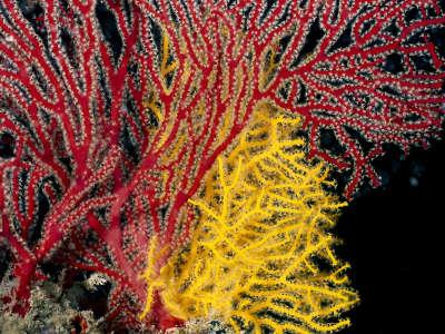 Underwater Wallpaper (74)