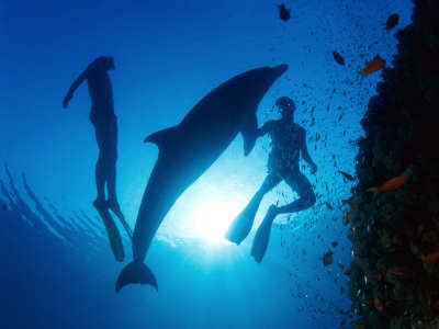 Underwater Wallpaper (8)