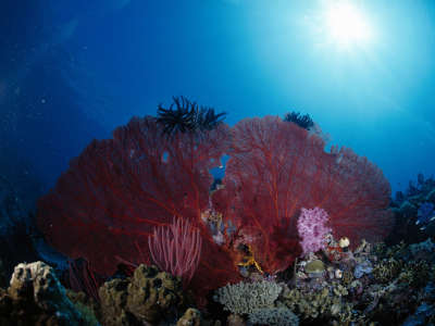 Underwater Wallpaper (86)