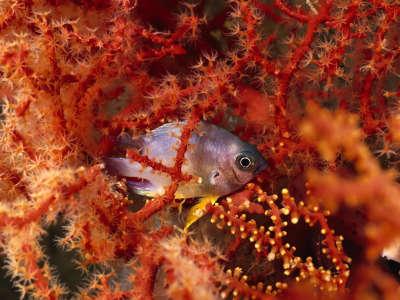 Underwater Wallpaper (87)