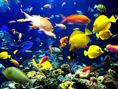 Underwater Wallpaper (9)