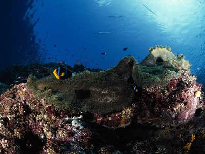 Underwater Wallpaper (91)
