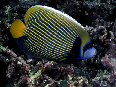 Underwater Wallpaper (94)