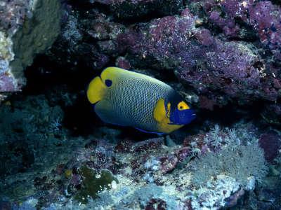 Underwater Wallpaper (95)