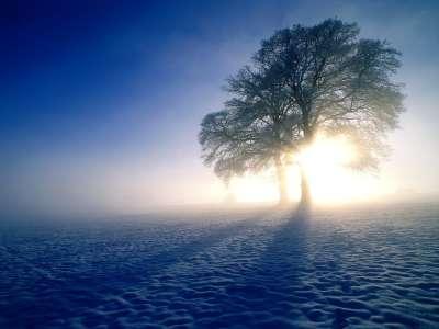 Winter Inspirations, Oak Trees