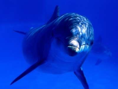 Aquatic Curiosity Bottlenose Dolphin