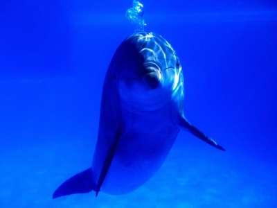 Bright Idea Bottlenose Dolphin