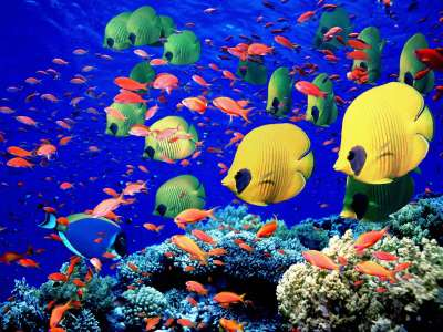 Life Below The Red Sea Egypt