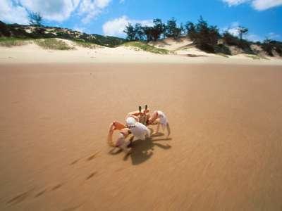 Sidesteppin\ Crab Bazaruto Mozambique
