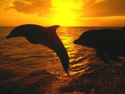 Sunset Jump Honduras