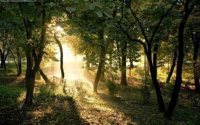 Dawn In Forrest
