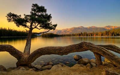 Nature - Lake and Tree