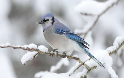 Winter Time and Bird