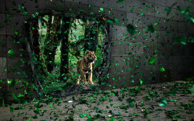 Tiger And Green Leaf