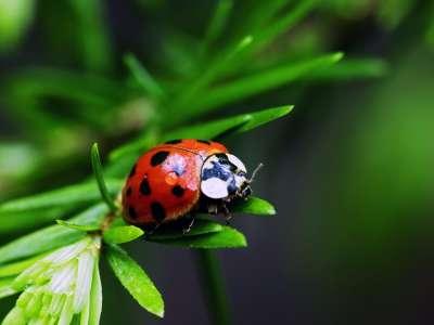 2 Ladybug