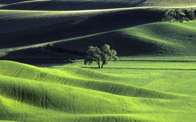 2 Meadow