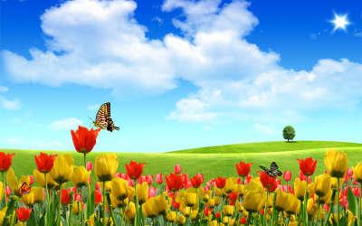 Fantasy Tulips