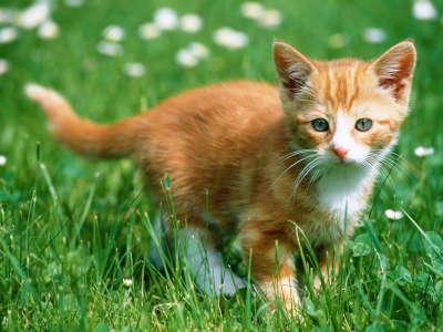 Baby Cat Brown