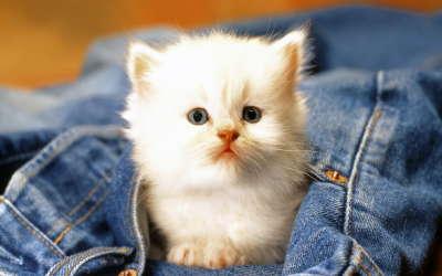 Cute Cat Baby