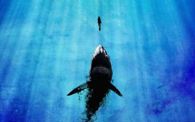 Fantasy Animal Shark