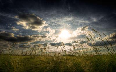 Field Sky