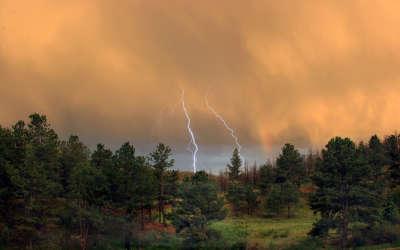 Forrest Thunder